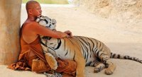 Picture-of-the-Day-Buddhist-Monk-Cuddles-With-a-Tiger.jpg