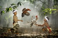 National_Geographic_Photography_Contest_2010_2.jpg