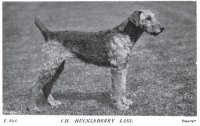 1908_Airedale_CHLass.jpg