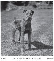 1908_Airedale_Hector.jpg